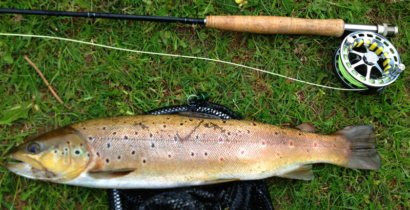 Stevens 3lbs trout